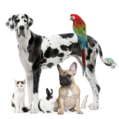 Hamilton Road Animal Hospital - London, ON - Veterinarians helping dogs, cats,rabbits, exotics and birds. animal hospital london ontario